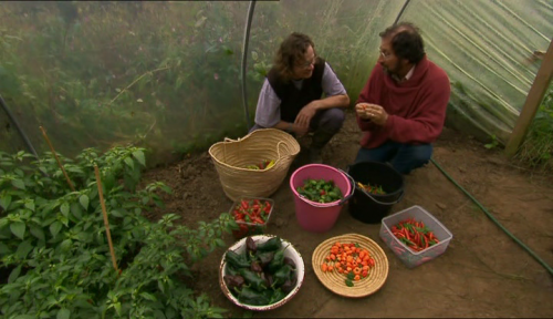 Hugh Fearnley Whittingstall in the polytunnel